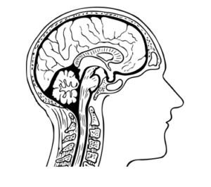 Breinleren: brain-based learning